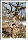 Pretzel Tree