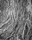 Willow Bark Detail
