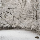Thanksgiving Snow