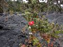 Plants on Lava
