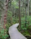 White Cedar Swamp Trail