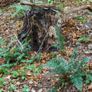 Stump & Ferns